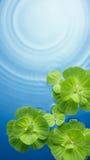 Piante verdi su acqua Fotografia Stock
