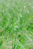 Piante verdi su un campo in estate Immagini Stock