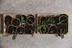 Piante verdi in una scatola di legno Fotografie Stock Libere da Diritti