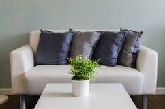 Piante verdi in vaso bianco sulla tavola bianca Fotografia Stock
