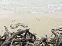 Pianti alla spiaggia con roccia sul mare Immagini Stock