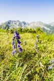 Pianti che si sviluppa soltanto nelle montagne Immagini Stock Libere da Diritti