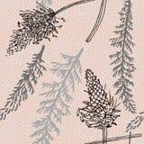 Pianti il modello senza cuciture con la pianta e il ribwort del millefoglio Fotografia Stock