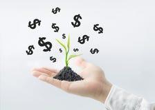 Pianti l'albero che cresce con il simbolo di dollaro sulla mano dell'uomo d'affari Affare fotografia stock libera da diritti