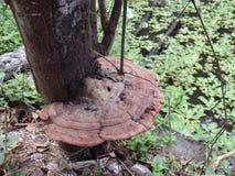 Pianti la crescita da un fungo nei tropici Fotografia Stock
