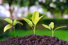Pianti la crescita dalla semina nel suolo su blackground vago Fotografia Stock Libera da Diritti