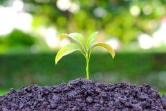 Pianti la crescita dalla semina nel suolo su blackground vago Fotografie Stock Libere da Diritti