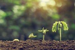 pianti la semina del punto crescente con luce solare con il filte d'annata del tono fotografie stock libere da diritti