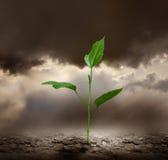 Pianti la terra guasto crescente della depressione. immagini stock
