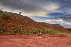 Pianti più alberi Immagini Stock Libere da Diritti