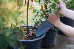 Pianti un albero ed allenti il suolo Fotografia Stock