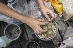 Pianti un bello cactus nel giardino fotografie stock libere da diritti