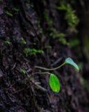 Piantina che cresce da un albero immagini stock libere da diritti