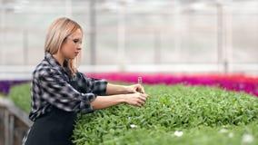 Piantina di versamento del giovane agricoltore femminile che tiene il tubo di vetro che funziona al colpo di medium della serra video d archivio
