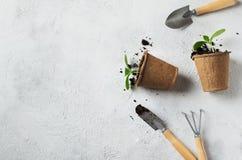 Piantina verde in vasi e strumenti su fondo bianco Tema di ecologia immagine stock