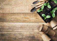 Piantina verde in vasi e strumenti su fondo di legno Tema di ecologia immagini stock libere da diritti