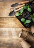 Piantina verde in vasi e strumenti su fondo di legno Tema di ecologia fotografia stock