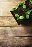 Piantina verde in vasi su fondo di legno Tema di ecologia fotografia stock libera da diritti