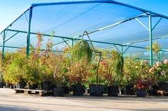 Piantine in contenitori ad una vendita del giardino Alberi da frutto e dell'ornamentale ed arbusti per la piantatura nella terra fotografia stock libera da diritti