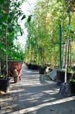 Piantine in contenitori ad una vendita del giardino Alberi da frutto per la piantatura nella terra fotografie stock libere da diritti