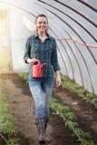 Piantine d'innaffiatura della donna dell'agricoltore in serra Immagini Stock