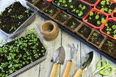 Piantine dei fiori della pansé e della petunia con gli strumenti di giardino sulle plance d'annata, vista superiore Fotografia Stock Libera da Diritti