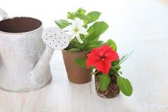 Piantine dei fiori e dell'annaffiatoio Immagine Stock