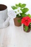 Piantine dei fiori e dell'annaffiatoio Fotografie Stock Libere da Diritti