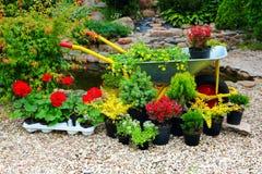 Piantine dei fiori e delle piante degli alberi Immagini Stock Libere da Diritti