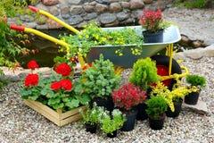 Piantine dei fiori e delle piante degli alberi Fotografia Stock Libera da Diritti