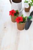 Piantine dei fiori su una tavola di legno Immagine Stock Libera da Diritti