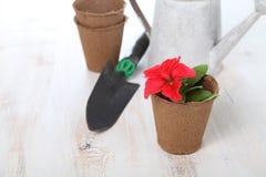 Piantine dei fiori su una tavola di legno Fotografia Stock Libera da Diritti