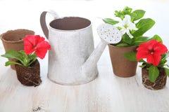 Piantine dei fiori su una tavola di legno Immagini Stock Libere da Diritti