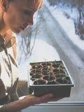 Piantine dei pomodori in vasi della torba Agricoltura di verdure Fotografie Stock Libere da Diritti
