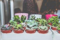 Piantine dei tipi differenti di succulenti in vasi neri di plastica da vendere nel mercato fotografia stock