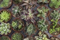 Piantine del fiore del giardino in piccoli vasi di plastica Fotografie Stock Libere da Diritti