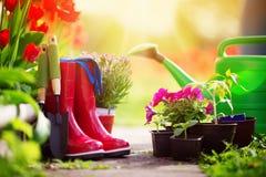 Piantine dell'ortaggio e del fiore che crescono nel giardino immagini stock libere da diritti