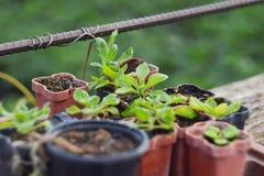 Piantine delle piante di giardino Il concetto di giardinaggio e di giardinaggio, piantante i fiori, piantine, eco, con le loro ma Fotografie Stock