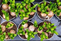 Piantine delle piante in una scatola prima della piantatura nel giardino, comprate sul mercato fotografia stock
