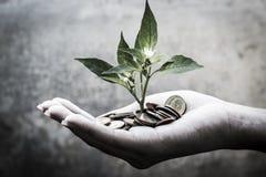 Piantine delle ricchezze Immagine Stock Libera da Diritti