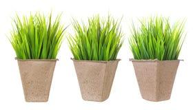 Piantine isolate Vaso del cartone per le piante crescenti con i germogli su fondo bianco Immagini Stock Libere da Diritti