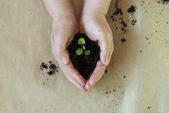 Piantine nelle mani di agricoltura Immagini Stock Libere da Diritti