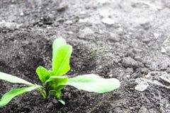 Piantine verdi piantate nella terra C'? un posto per testo immagine stock