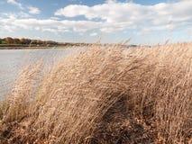 Pianura aperta scorrente dorata delle canne del paese sbalorditivo del paesaggio Fotografia Stock