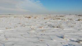 Pianura innevata con erba asciutta Natura nell'inverno, campagna Mosca liscia in avanti sopra la terra archivi video