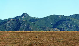 Pianura orientale dell'isola di Corsica Immagine Stock