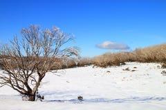 Pianure della neve Fotografia Stock