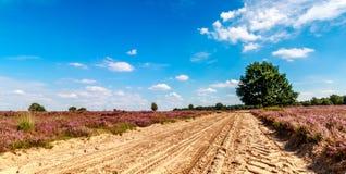 Piasek ścieżka między purpurowym wrzosowiskiem z niebieskim niebem Fotografia Stock