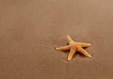 piasek czerwona rozgwiazda Zdjęcie Royalty Free