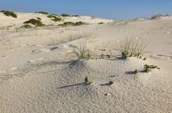 Piasek diun krajobraz. Fingal zatoka. Australia Obrazy Royalty Free